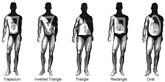 The reverse triangle is associated with health and attractiveness. You can achieve it by lifting weights.